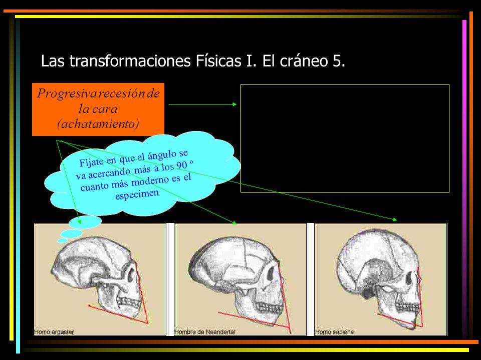 Las transformaciones Físicas I. El cráneo 5.