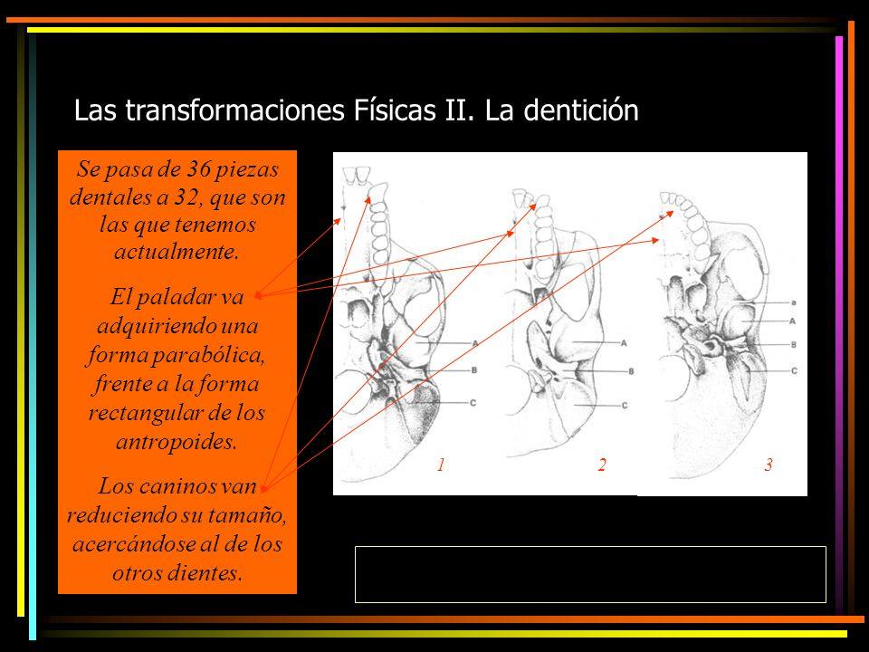 Las transformaciones Físicas II.