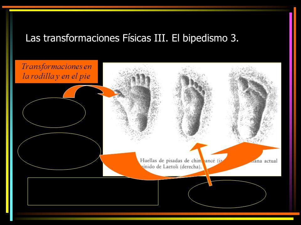 Las transformaciones Físicas III. El bipedismo 3.