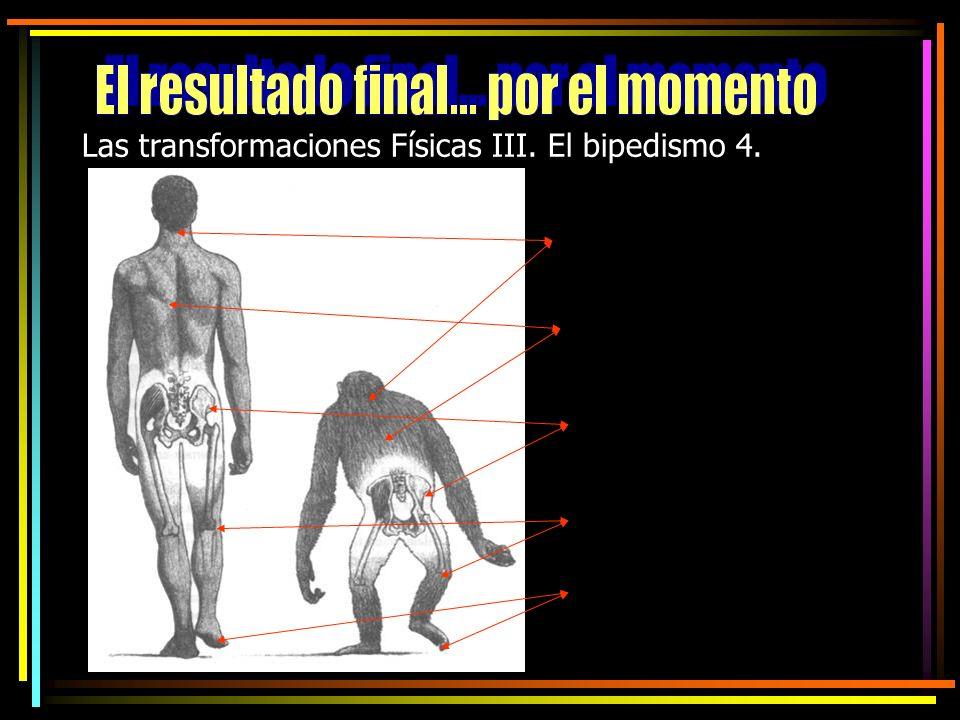 Las transformaciones Físicas III. El bipedismo 4.