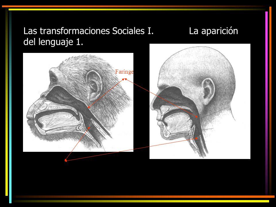Las transformaciones Sociales I. La aparición del lenguaje 1.