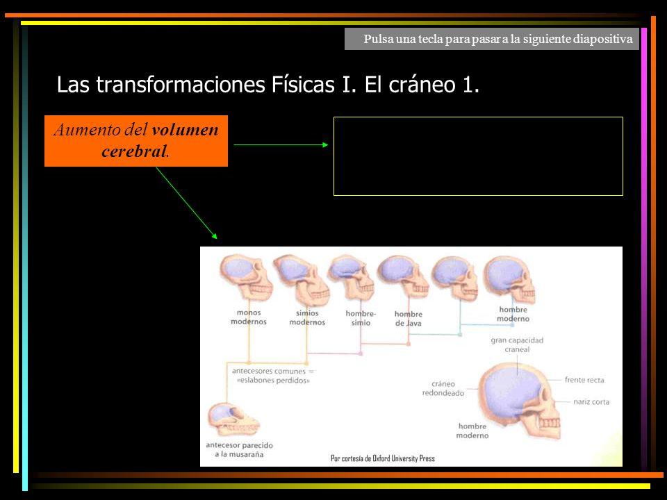 Las transformaciones Físicas I. El cráneo 1.