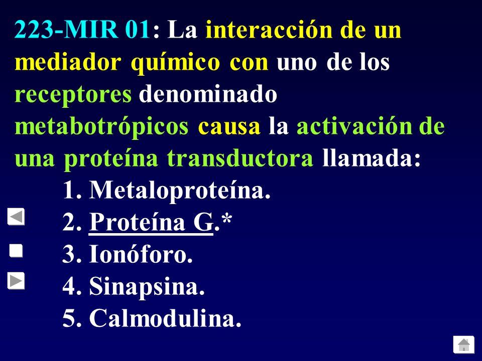 222-MIR 01: ¿Cuál de los siguientes aminoácidos se comporta como un neurotransmisor excitador en el sistema nervioso central humano?: 1. Ácido aspárti