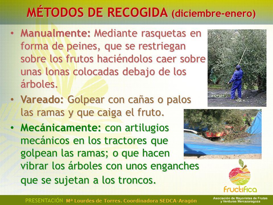 MÉTODOS DE RECOGIDA (diciembre-enero) Manualmente: Mediante rasquetas en forma de peines, que se restriegan sobre los frutos haciéndolos caer sobre un