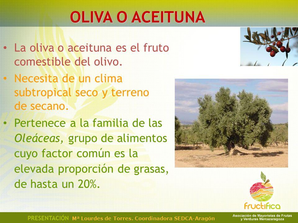 OLIVA O ACEITUNA La oliva o aceituna es el fruto comestible del olivo. Necesita de un clima subtropical seco y terreno de secano. Pertenece a la famil