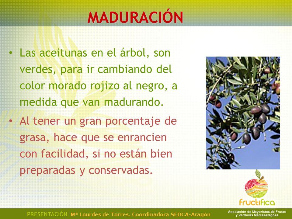 MADURACIÓN Las aceitunas en el árbol, son verdes, para ir cambiando del color morado rojizo al negro, a medida que van madurando. Al tener un gran por