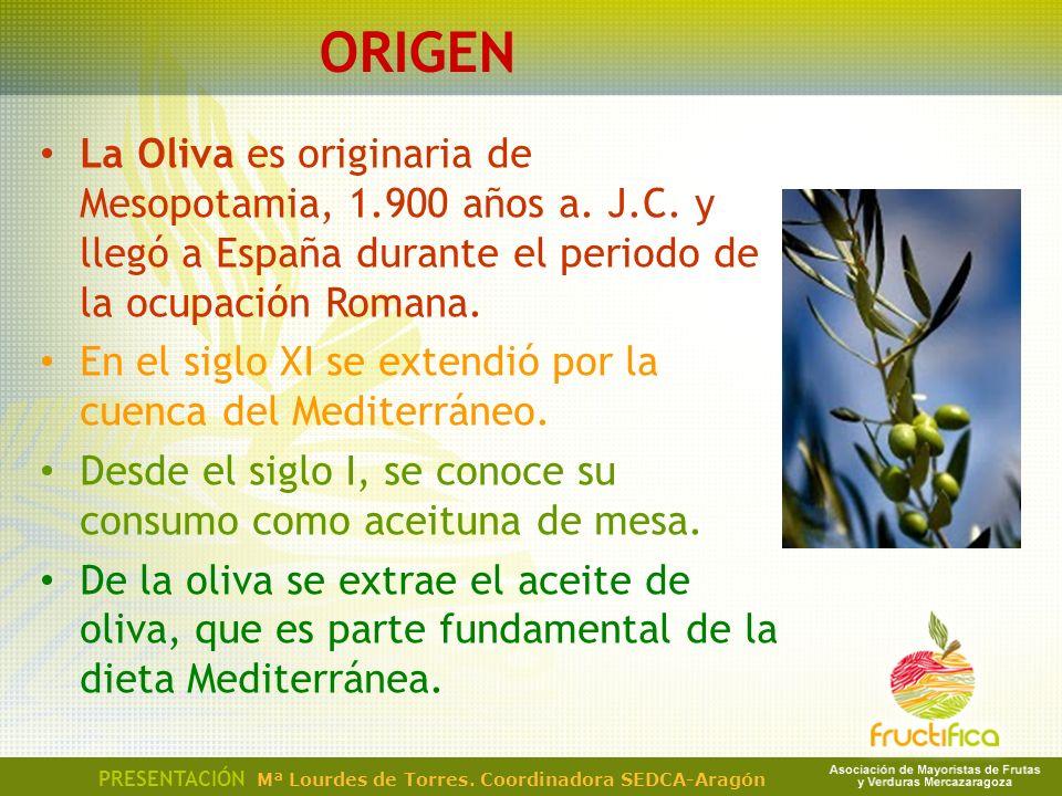 ORIGEN La Oliva es originaria de Mesopotamia, 1.900 años a. J.C. y llegó a España durante el periodo de la ocupación Romana. En el siglo XI se extendi