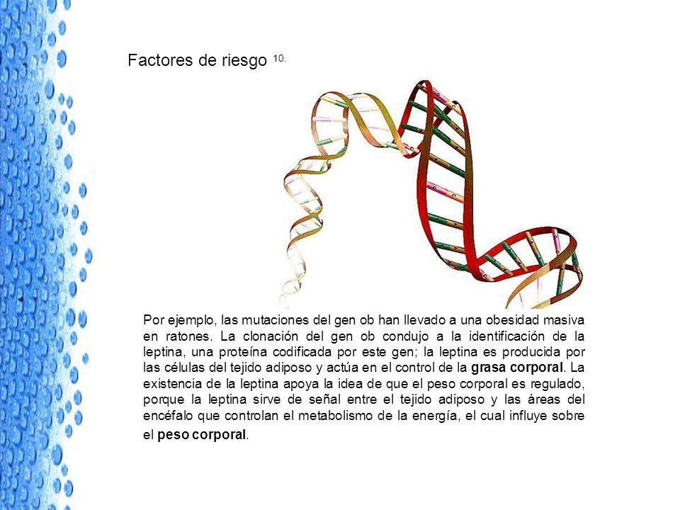 Factores de riesgo 10. Por ejemplo, las mutaciones del gen ob han llevado a una obesidad masiva en ratones. La clonación del gen ob condujo a la ident