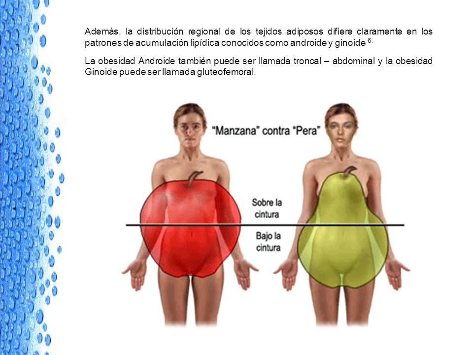 Además, la distribución regional de los tejidos adiposos difiere claramente en los patrones de acumulación lipídica conocidos como androide y ginoide