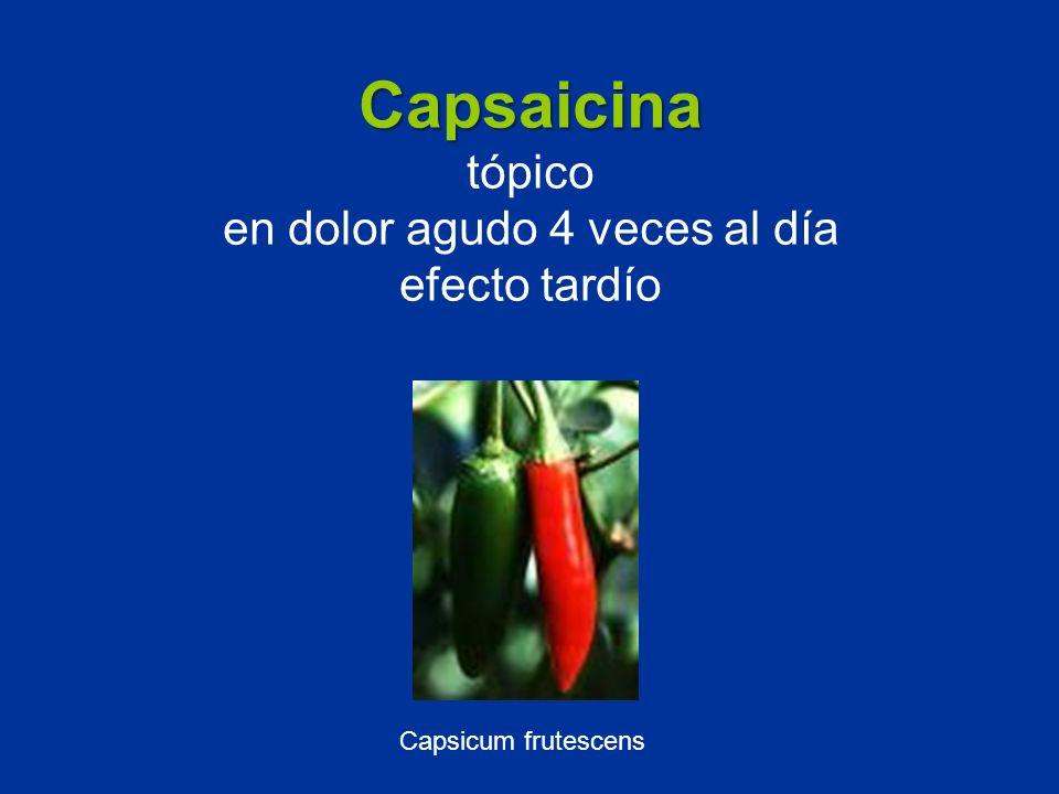Capsaicina Capsaicina tópico en dolor agudo 4 veces al día efecto tardío Capsicum frutescens