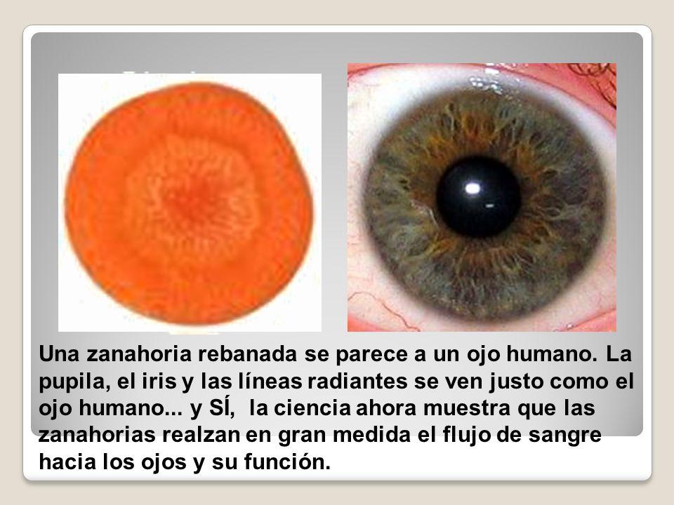 Una zanahoria rebanada se parece a un ojo humano. La pupila, el iris y las líneas radiantes se ven justo como el ojo humano... y SÍ, la ciencia ahora