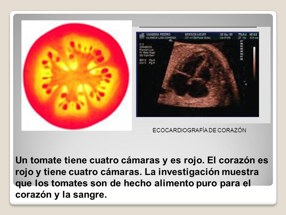 Un tomate tiene cuatro cámaras y es rojo. El corazón es rojo y tiene cuatro cámaras. La investigación muestra que los tomates son de hecho alimento pu