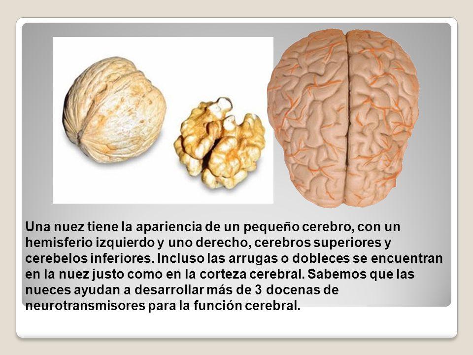 Una nuez tiene la apariencia de un pequeño cerebro, con un hemisferio izquierdo y uno derecho, cerebros superiores y cerebelos inferiores. Incluso las