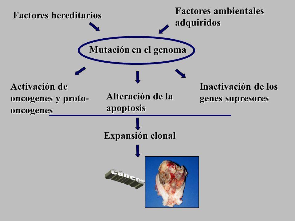 Factores ambientales adquiridos Factores hereditarios Activación de oncogenes y proto- oncogenes Alteración de la apoptosis Inactivación de los genes