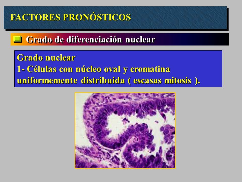 FACTORES PRONÓSTICOS Grado de diferenciación nuclear Grado nuclear 1- Células con núcleo oval y cromatina uniformemente distribuida ( escasas mitosis