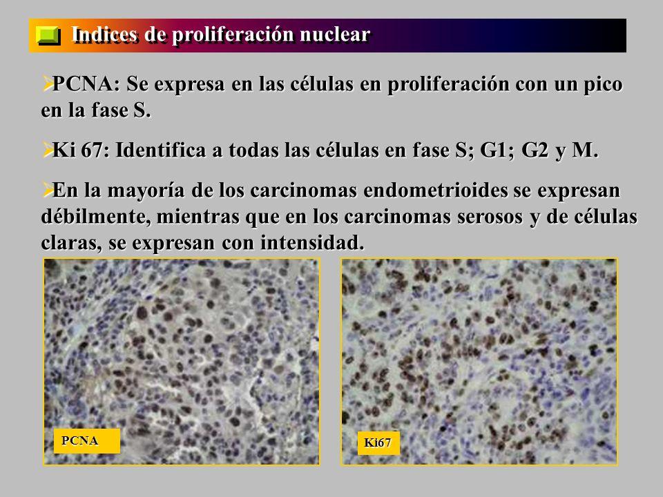 Indices de proliferación nuclear PCNA: Se expresa en las células en proliferación con un pico en la fase S. PCNA: Se expresa en las células en prolife