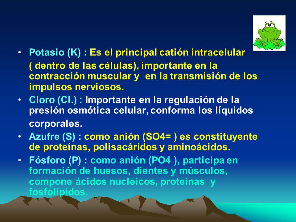 2. Bioelementos secundarios : Calcio (Ca) : Participa en la formación de muchos tejidos como huesos, cartílagos y dientes, en la coagulación de la san