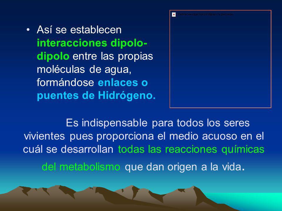Por eso en la práctica la molécula de agua se comporta como un dipolo