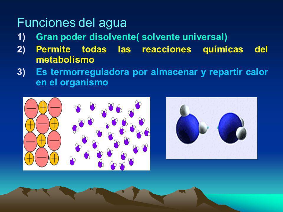 ¿ Como se presenta el agua en nosotros? EGESTIÓN De agua sudor:100cc Piel Evaporación 350cc Respiración = 350 cc Digestivo = 200 cc Riñón = 1.400 cc T