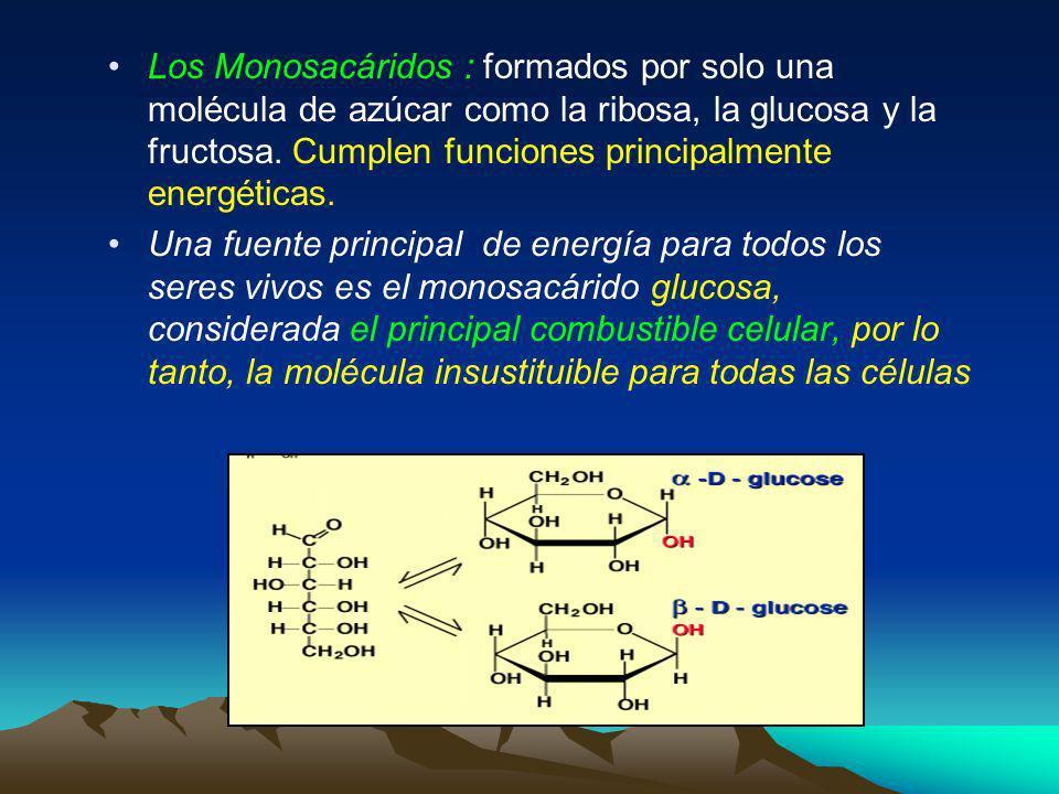 Biomoléculas orgánicas 1.Carbohidratos o Glúcidos: Los carbohidratos o azúcares son las biomoléculas fundamentales de producción de energía en la mayo