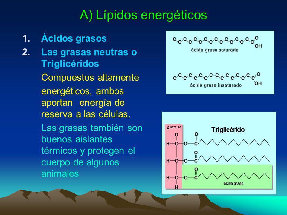 2. Lípidos, grasas o aceites Son compuestos formados por C-H y O. Son compuestos orgánicos apolares son insolubles en agua y se disuelven solventes ap