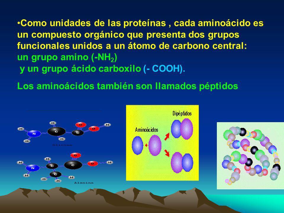 3. Proteínas Son las moléculas orgánicas de gran peso molecular más abundantes en las células. Las moléculas de proteínas están conformadas por C-H-O