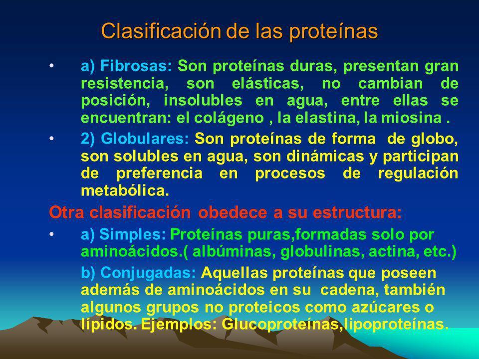 La principal función de las proteínas es ser moléculas estructurales, sin embargo, pueden aportar energía en casos de desnutrición grave, aportando 4