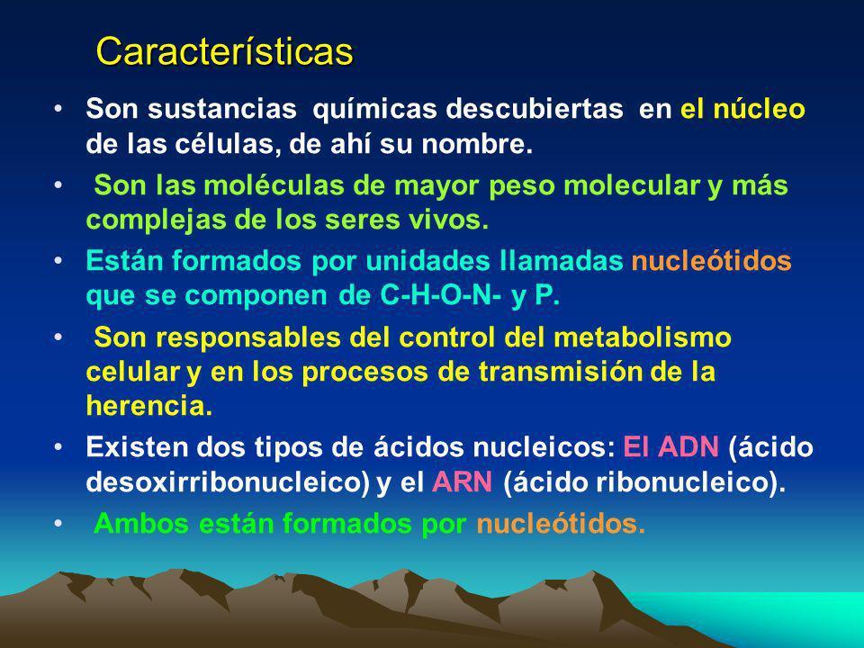 LOS ACIDOS NUCLEICOS LAS BASES QUIMICAS DE LA HERENCIA LOS ACIDOS NUCLEICOS LAS BASES QUIMICAS DE LA HERENCIA