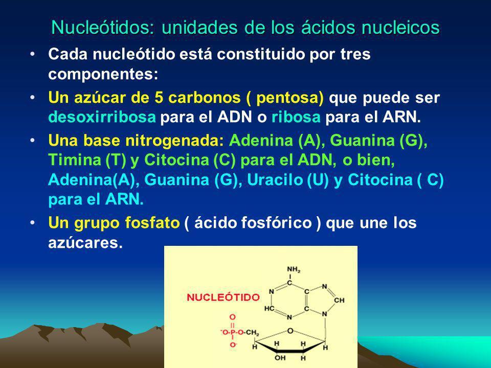 Características Son sustancias químicas descubiertas en el núcleo de las células, de ahí su nombre. Son las moléculas de mayor peso molecular y más co