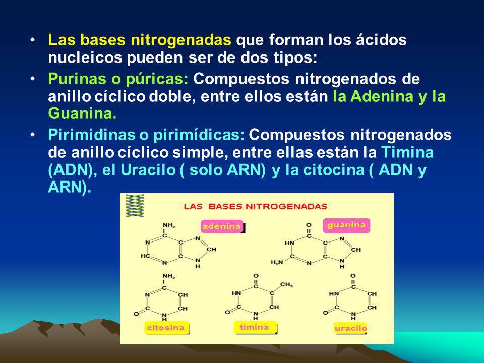 Nucleótidos: unidades de los ácidos nucleicos Cada nucleótido está constituido por tres componentes: Un azúcar de 5 carbonos ( pentosa) que puede ser