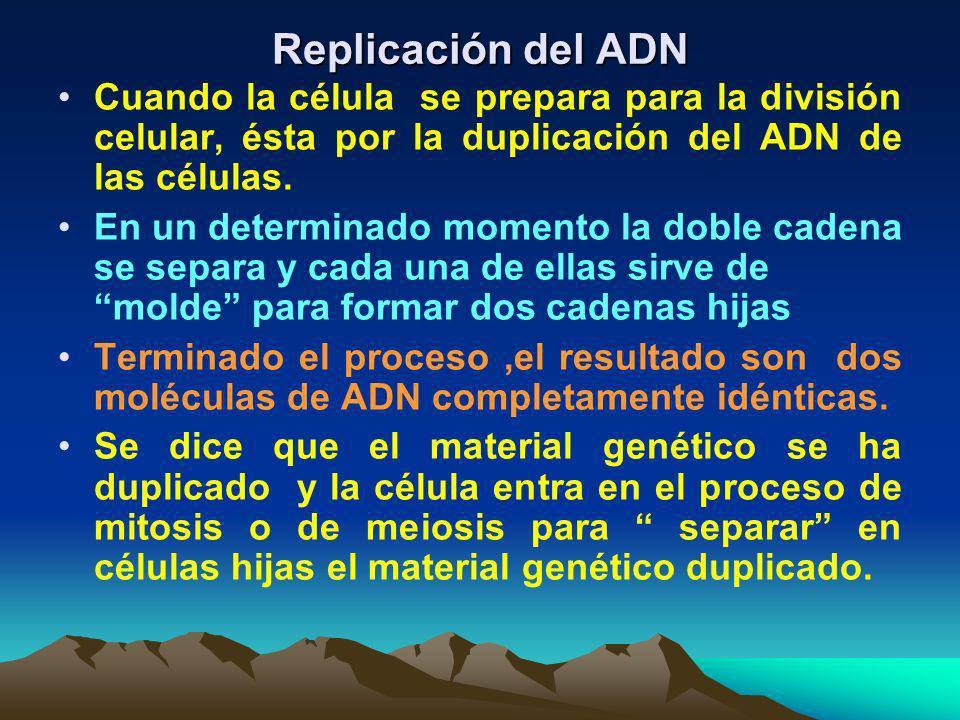 Existe en el ADN la regla del complemento de las bases nitrogenadas en que la Adenina siempre se va a unir con la Timina o a la inversa, en cambio, la
