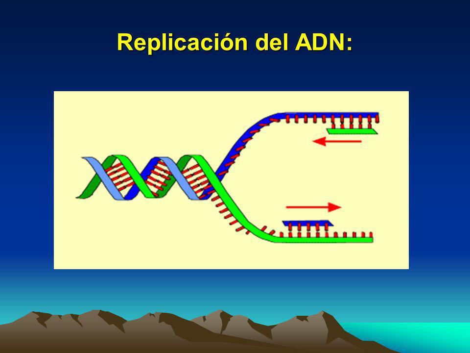 Replicación del ADN Cuando la célula se prepara para la división celular, ésta por la duplicación del ADN de las células. En un determinado momento la