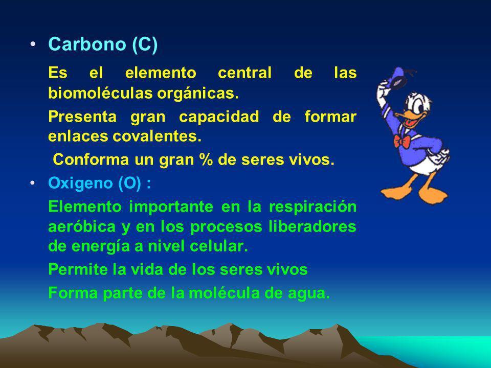 1) Bioelementos primarios : Son los bioelementos más abundantes y de bajo peso atómico Al unirse forman enlaces muy fuertes entre sí Constituyen el 96