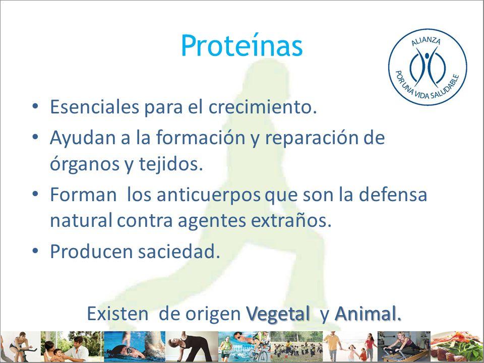 Proteínas Esenciales para el crecimiento. Ayudan a la formación y reparación de órganos y tejidos. Forman los anticuerpos que son la defensa natural c