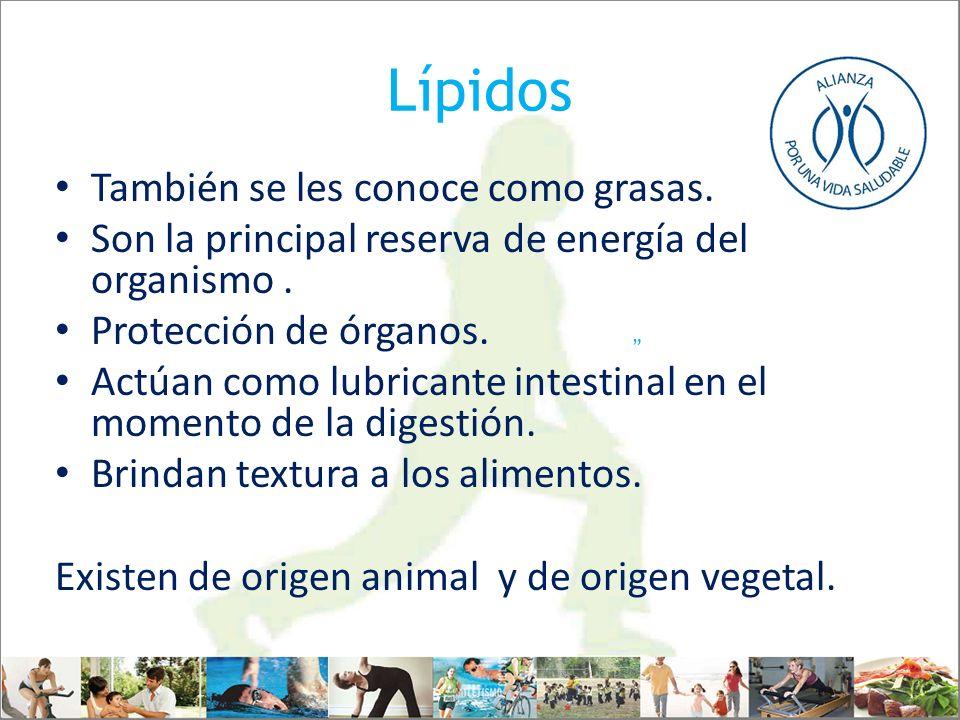 Lípidos También se les conoce como grasas. Son la principal reserva de energía del organismo. Protección de órganos. Actúan como lubricante intestinal