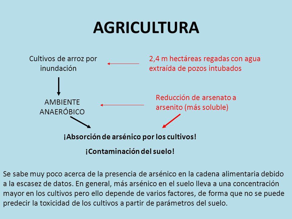 AGRICULTURA Cultivos de arroz por inundación 2,4 m hectáreas regadas con agua extraída de pozos intubados AMBIENTE ANAERÓBICO Reducción de arsenato a