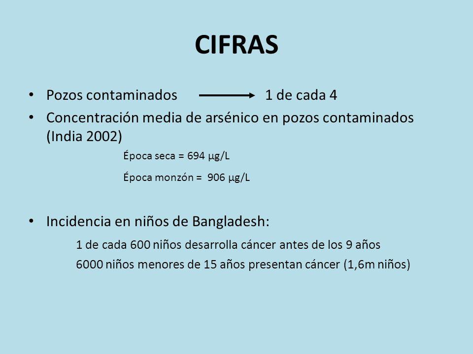 CIFRAS Pozos contaminados1 de cada 4 Concentración media de arsénico en pozos contaminados (India 2002) Época seca = 694 µg/L Época monzón = 906 µg/L
