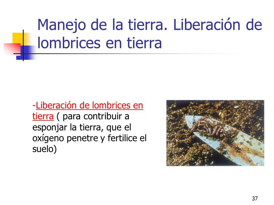 37 -Liberación de lombrices en tierra ( para contribuir a esponjar la tierra, que el oxígeno penetre y fertilice el suelo) Manejo de la tierra. Libera