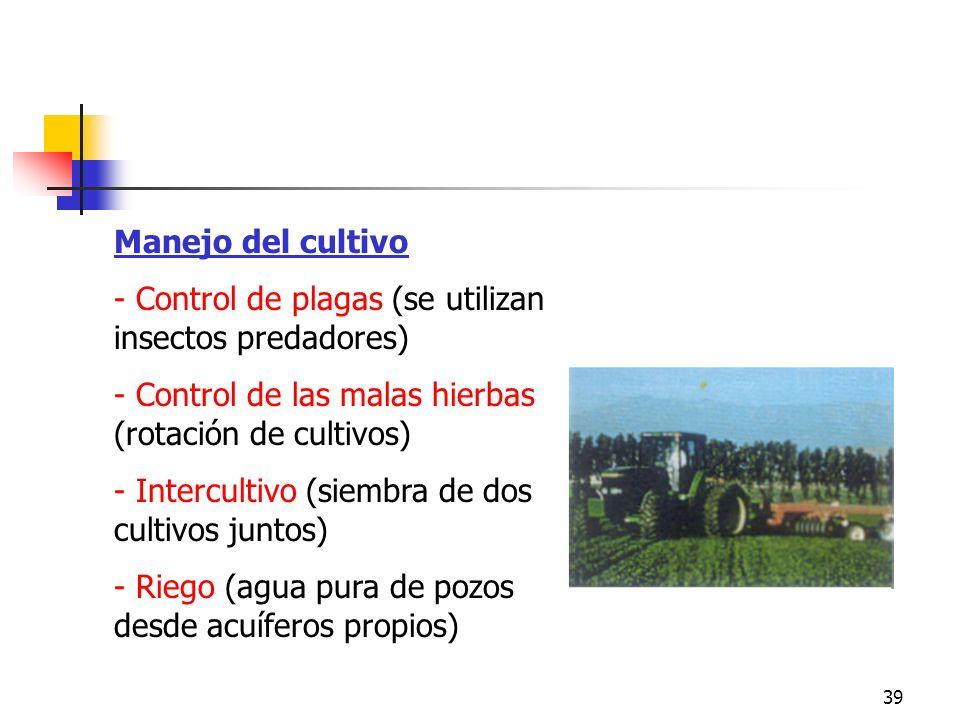 39 Manejo del cultivo - Control de plagas (se utilizan insectos predadores) - Control de las malas hierbas (rotación de cultivos) - Intercultivo (siem
