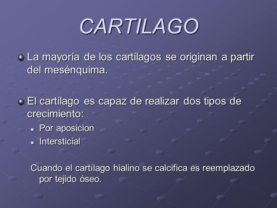 CARTILAGO La mayoría de los cartílagos se originan a partir del mesénquima. El cartílago es capaz de realizar dos tipos de crecimiento: Por aposicion