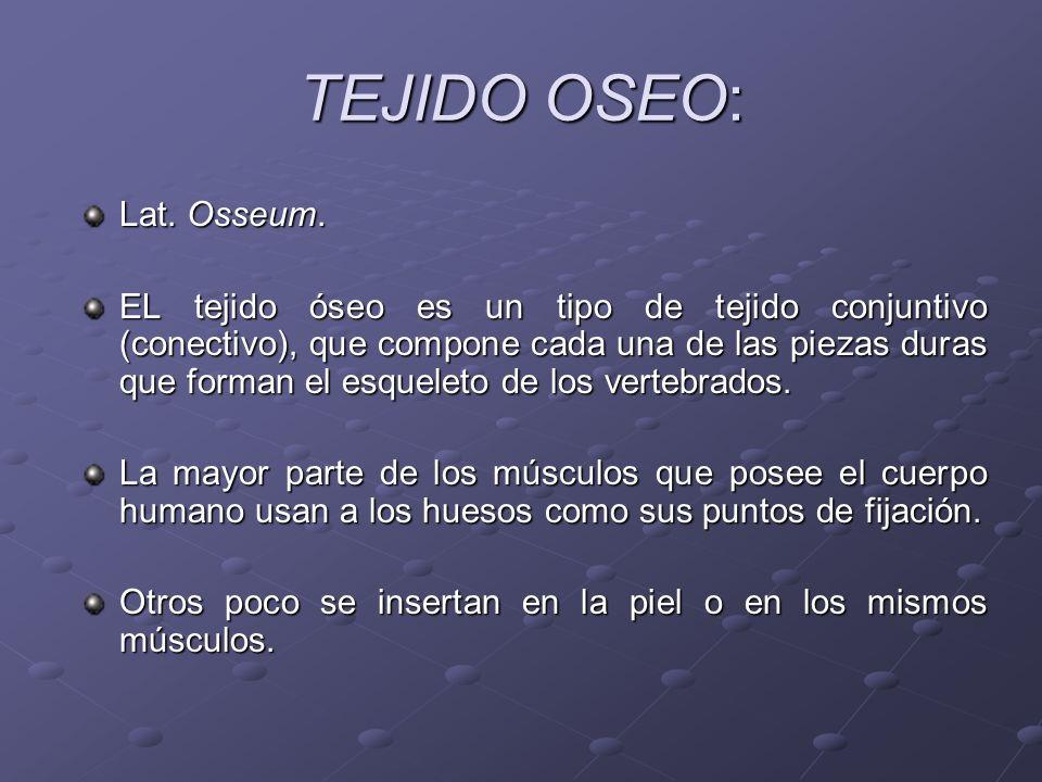 TEJIDO OSEO: Lat. Osseum. EL tejido óseo es un tipo de tejido conjuntivo (conectivo), que compone cada una de las piezas duras que forman el esqueleto