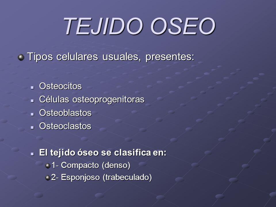 TEJIDO OSEO Tipos celulares usuales, presentes: Osteocitos Osteocitos Células osteoprogenitoras Células osteoprogenitoras Osteoblastos Osteoblastos Os