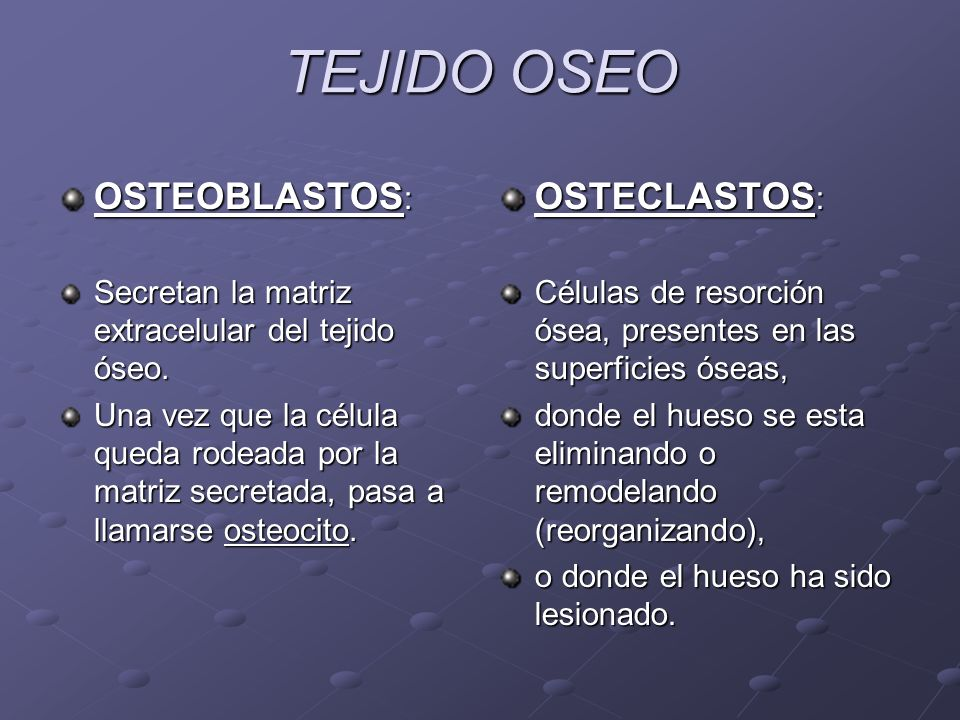 TEJIDO OSEO OSTEOBLASTOS : Secretan la matriz extracelular del tejido óseo. Una vez que la célula queda rodeada por la matriz secretada, pasa a llamar