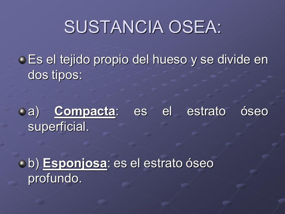 SUSTANCIA OSEA: Es el tejido propio del hueso y se divide en dos tipos: a) Compacta: es el estrato óseo superficial. b) Esponjosa: es el estrato óseo