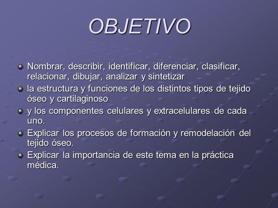 OBJETIVO Nombrar, describir, identificar, diferenciar, clasificar, relacionar, dibujar, analizar y sintetizar la estructura y funciones de los distint
