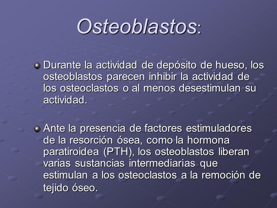 Osteoblastos : Durante la actividad de depósito de hueso, los osteoblastos parecen inhibir la actividad de los osteoclastos o al menos desestimulan su
