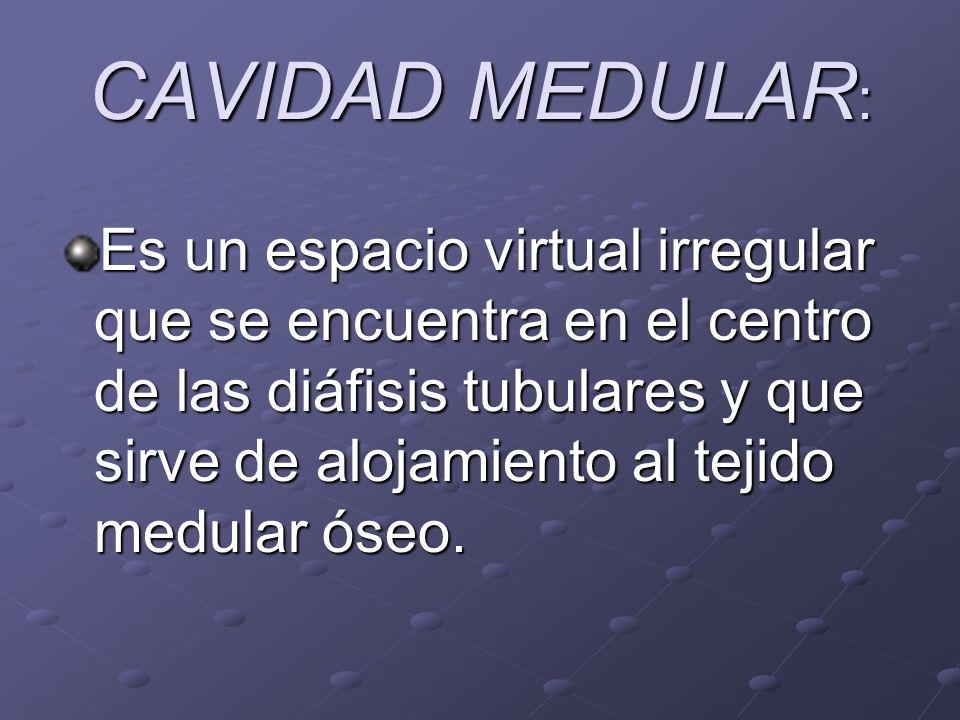 CAVIDAD MEDULAR : Es un espacio virtual irregular que se encuentra en el centro de las diáfisis tubulares y que sirve de alojamiento al tejido medular