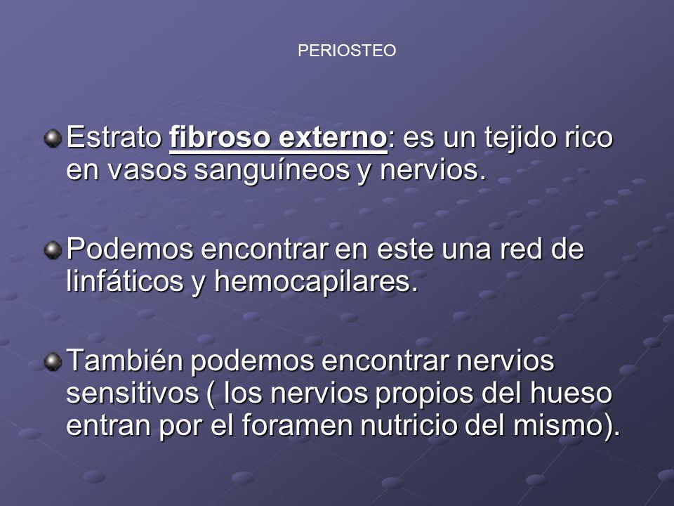 PERIOSTIO : Estrato interno: Se denomina como Osteogénico pues por ser abundante en osteoblastos puede regenerar hueso.
