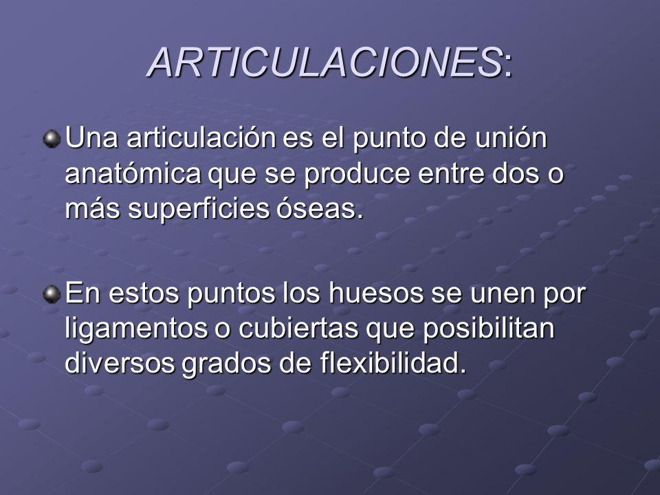 ARTICULACIONES: Una articulación es el punto de unión anatómica que se produce entre dos o más superficies óseas. En estos puntos los huesos se unen p
