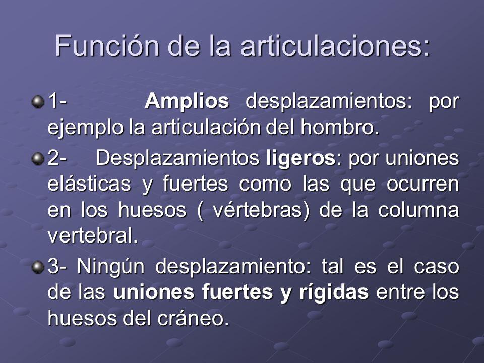 Función de la articulaciones: 1- Amplios desplazamientos: por ejemplo la articulación del hombro. 2- Desplazamientos ligeros: por uniones elásticas y